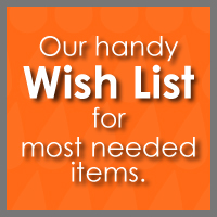 amazon-link-wish-list-a-million-drops-charity-homeless-youth-los-angeles-united-states-usa